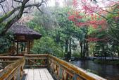2012武陵冬景~楓葉紅銀杏黃:1305735523.jpg