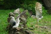 飛鳥練拍~大安森林公園:v 136.JPG