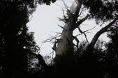 馬告生態公園.明池森林遊樂區:1807562972.jpg