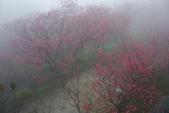 2013陽明山~迷霧朦朧之美:1308565170.jpg