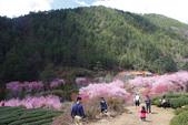 2012武陵農場賞櫻:1837851633.jpg