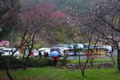 2012武陵冬景~楓葉紅銀杏黃:1305735548.jpg