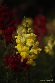 9803花兒寫真:1470786623.jpg