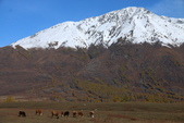北疆金秋(3)喀納斯湖、禾木村:IMG_4829.JPG