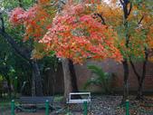 """2013台北植物園~獨領""""楓""""騷:1029877522.jpg"""