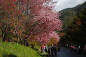 2012武陵農場賞櫻:1837851654.jpg