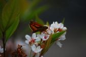 2012與春天有約~台北植物園:1426725643.jpg