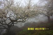2012南投信義鄉賞梅~烏松崙:1335887928.jpg