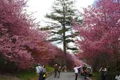2012武陵農場賞櫻:1837851674.jpg