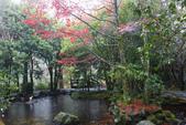 2012武陵冬景~楓葉紅銀杏黃:1305735524.jpg