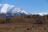 北疆金秋(3)喀納斯湖、禾木村:IMG_4827.JPG