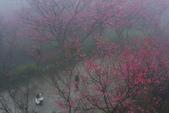 2013陽明山~迷霧朦朧之美:1308565171.jpg