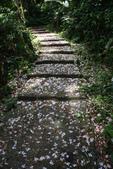 2012共桐賞花:大山背客家人文生態館:1273974724.jpg