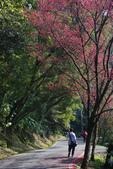 2012龍年風景(茶花山櫻花):1118862639.jpg
