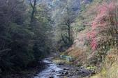 2012武陵農場賞櫻:1837845740.jpg
