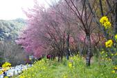 2012武陵農場賞櫻:1837836714.jpg