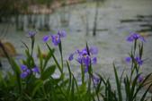 2012春暖花開~流蘇、野薔薇、加羅林魚木…..:1055388511.jpg