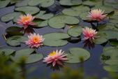 2012與春天有約~台北植物園:1426725646.jpg