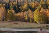 北疆金秋(3)喀納斯湖、禾木村:IMG_4771.JPG