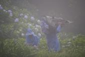 2012繡球花.阿勃勒.:1603070950.jpg