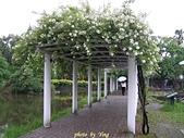 珠兒愛拍:藤蔓植物:野薔薇