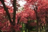98.04賞楓:台北奧萬大.植物園:1173782996.jpg