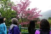 走春~陽明山、竹子湖、硫磺谷:V 028-3.jpg