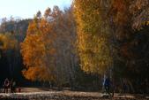 北疆金秋(3)喀納斯湖、禾木村:IMG_4095.JPG