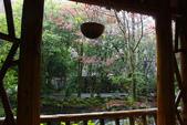 2012武陵冬景~楓葉紅銀杏黃:1305735525.jpg
