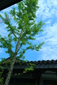 (3)杭州~萬松書院、西湖、南宋官窯、西溪溼地:S 990.JPG