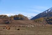 北疆金秋(3)喀納斯湖、禾木村:IMG_4821.JPG