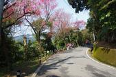 2012龍年風景(茶花山櫻花):1118862640.jpg