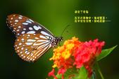 蝴蝶真美麗:1677431233.jpg