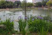 2012春暖花開~流蘇、野薔薇、加羅林魚木…..:1055388512.jpg