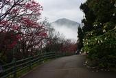 2013陽明山~迷霧朦朧之美:1308565149.jpg