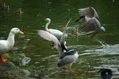 飛鳥練拍~大安森林公園:v 070.JPG