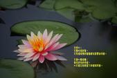 2012與春天有約~台北植物園:1426725647.jpg
