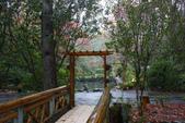 2012武陵冬景~楓葉紅銀杏黃:1305735527.jpg