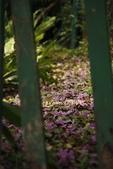 97.03風鈴木、紫藤、流蘇、木棉:1603844422.jpg