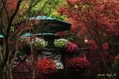 98.04賞楓:台北奧萬大.植物園:1173782997.jpg