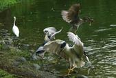 飛鳥練拍~大安森林公園:v 099.jpg