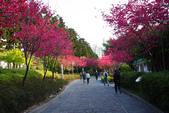 2013新竹麗池之櫻.中正紀念堂梅櫻:1443385342.jpg