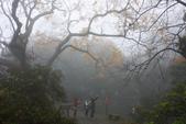 2013陽明山~迷霧朦朧之美:1308565195.jpg