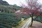 2012武陵農場賞櫻:1837845743.jpg