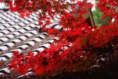 2011福壽山農場~楓景變裝秀:1051285050.jpg