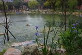 2012春暖花開~流蘇、野薔薇、加羅林魚木…..:1055388513.jpg