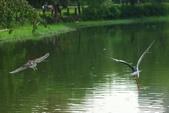飛鳥練拍~大安森林公園:v 036.JPG