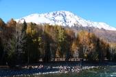 北疆金秋(3)喀納斯湖、禾木村:IMG_4018.JPG