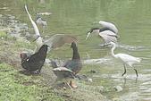 飛鳥練拍~大安森林公園:v 143.JPG