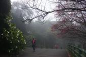 2013陽明山~迷霧朦朧之美:1308565150.jpg